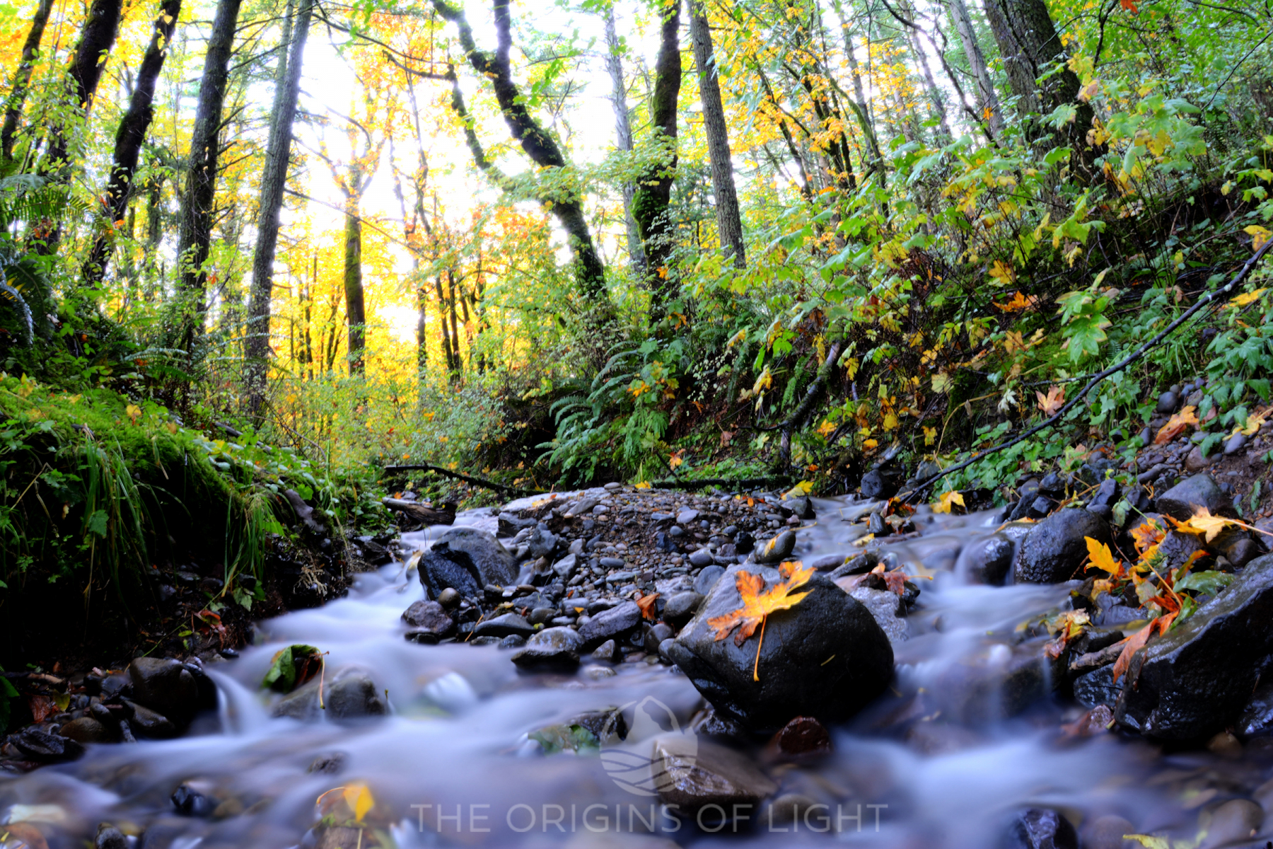 River in Autumn, Columbia River Gorge