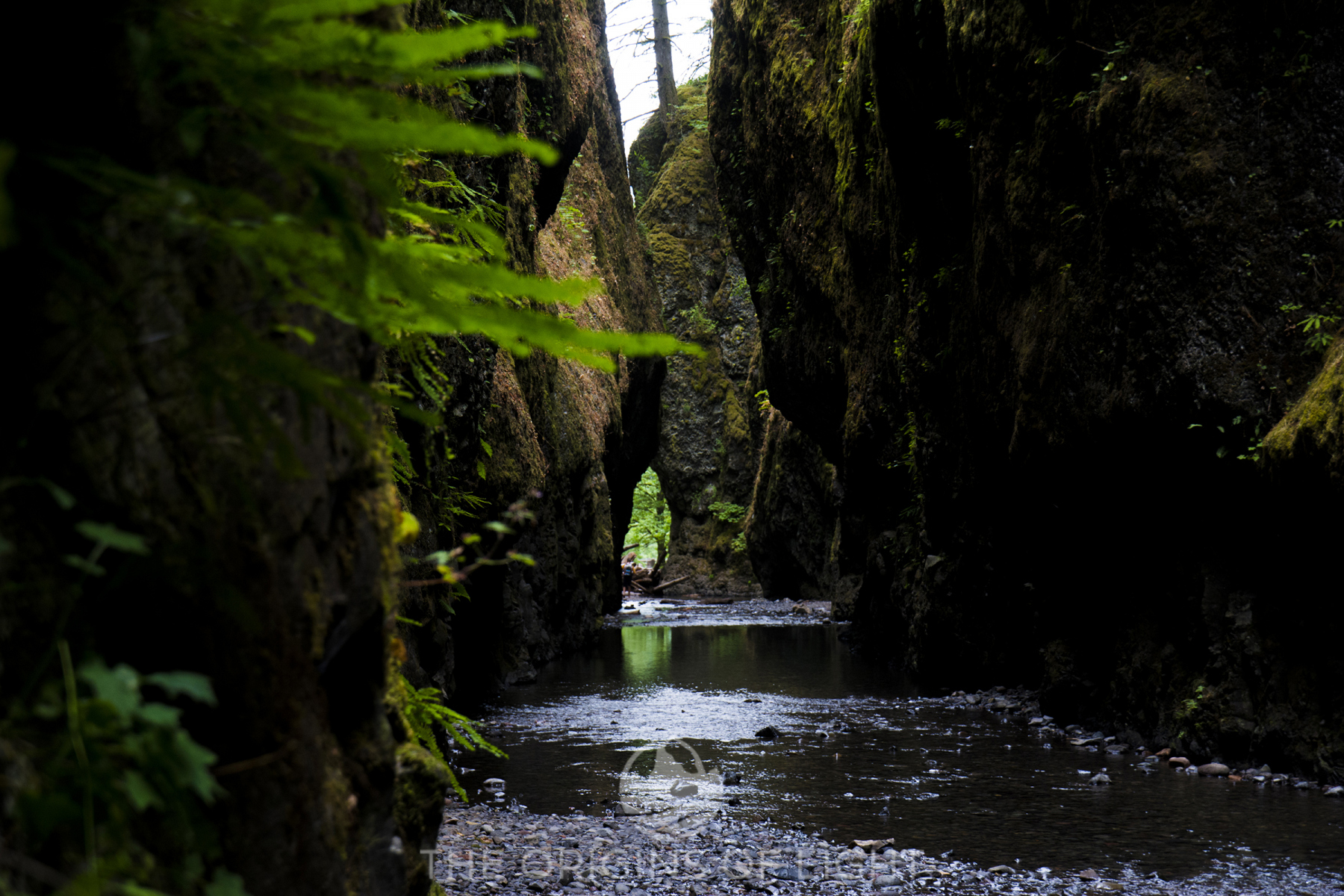Oneonta River Gorge
