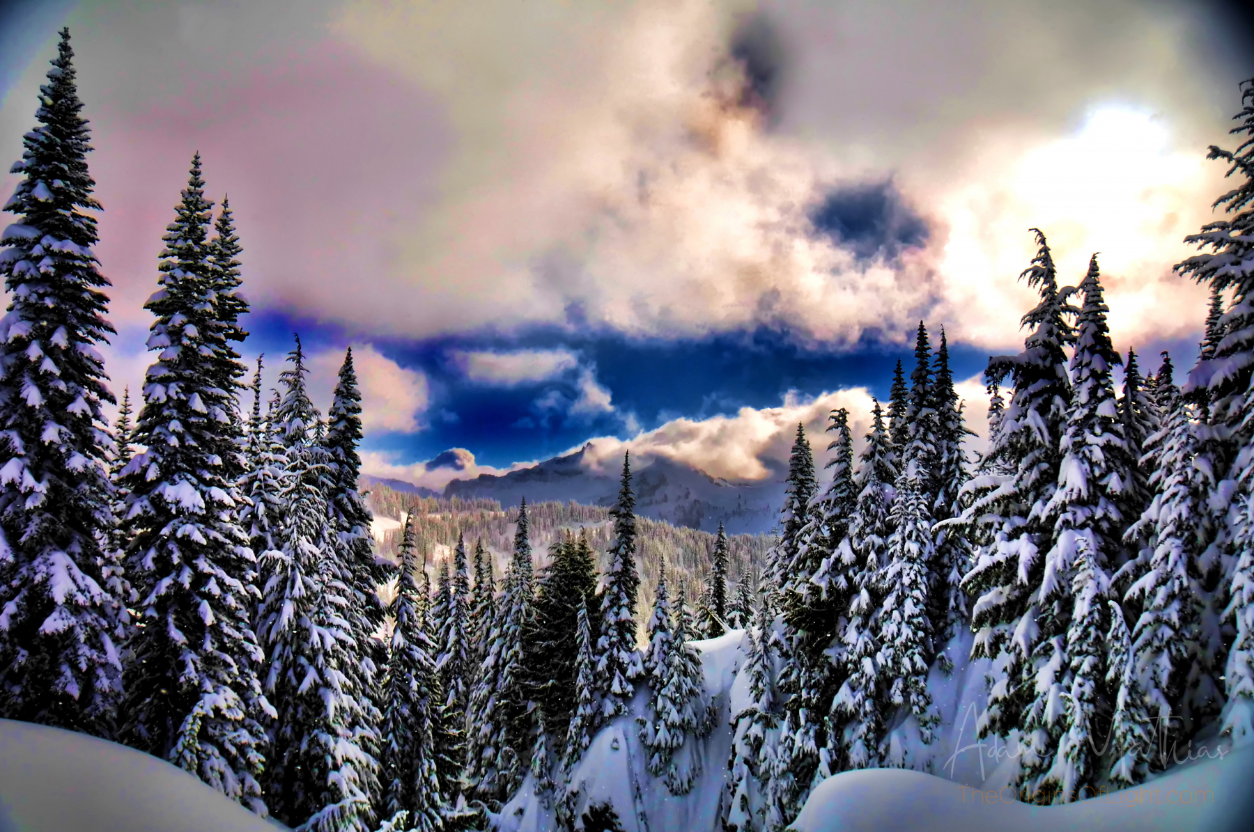 Cascade Range from Paradise, Mt Rainier, Washington